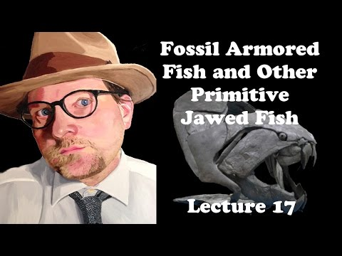 Lecture 17 Fossil Armored Fish And Other Primitive Jawed Fish