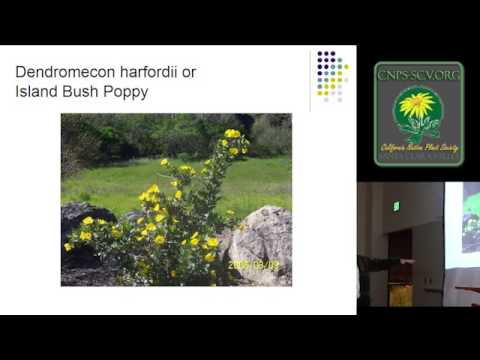 Native Plants in a California Garden, a talk by Patrick Pizzo