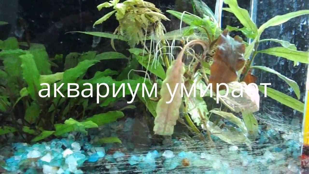 Как вырастить водоросли для аквариума в домашних условиях 84