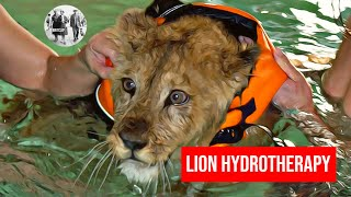 Lion cub paddles back to health
