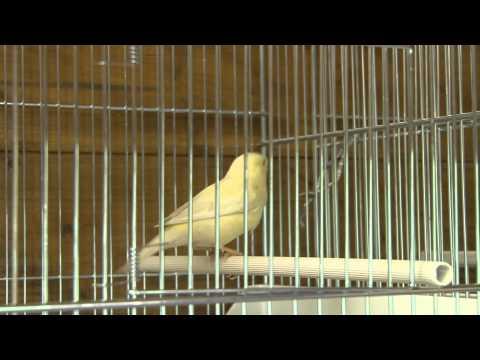 Mes Oiseaux A Vendre Youtube