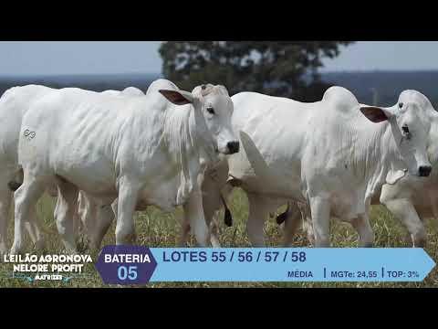 BATERIA 05