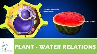PLANT   WATER RELATIONS