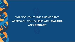 Why do you think a gene drive approach could help with malaria and dengue?