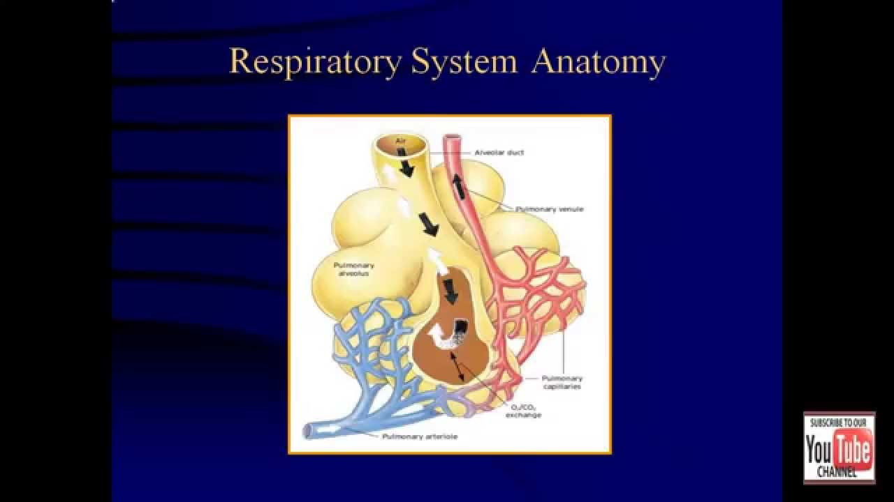 Emt Review - Respiratory System - YouTube