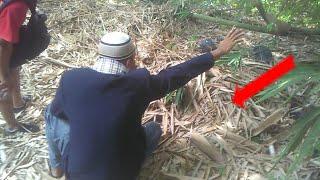 Download Video Awalnya Mimpi..inilah Penarikan Pusaka dihutan Bambu..ternyata Bendanya berkepala ular MP3 3GP MP4