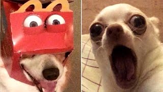 Funny Animal Videos that Make Me Burst Into Tears Laughing 😂 (CUTE)