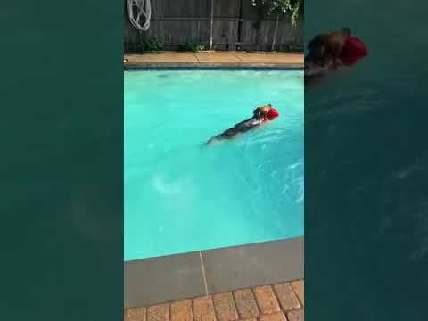 Swimming with dogs and Angelo at home | Dogs Swimming in the Pool