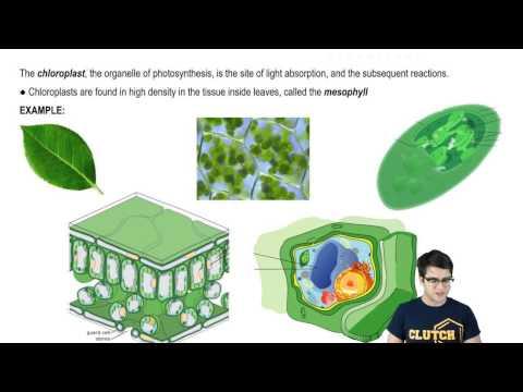 Autotrophs, Heterotrophs, and Chloroplasts
