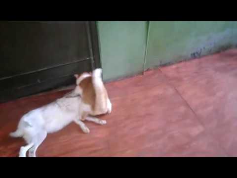 Это видео с охотничьим котом возмутило зрителей и рассмешило автора
