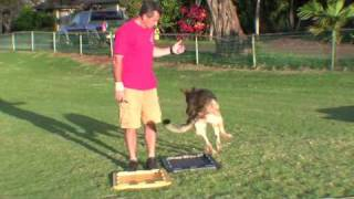 Sit Means Sit Dog Training Video Heel To Front Progressions