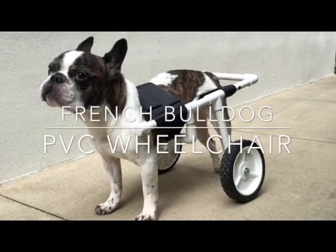 DIY French Bulldog PVC Dog Wheelchair