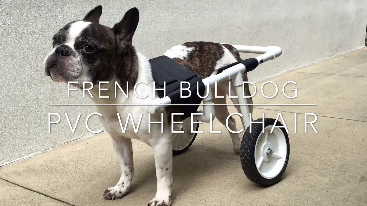 Wheelchair Dog How To Make Easy Chair Covers Diy French Bulldog Pvc Youtube