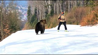 Skiing with the bear on the slope  9 Martie 2021, Partia Cocosul Predeal Romania, by Mister Fox