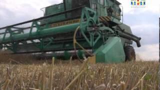 видео Макароны из твёрдых сортов пшеницы