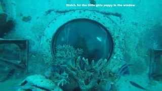 Scuba Diving Fisheye. Piti, Guam