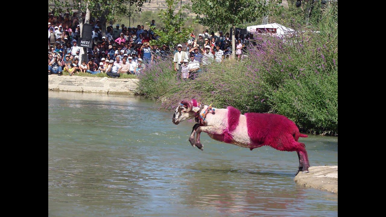 sudan koyun geçirme ile ilgili görsel sonucu