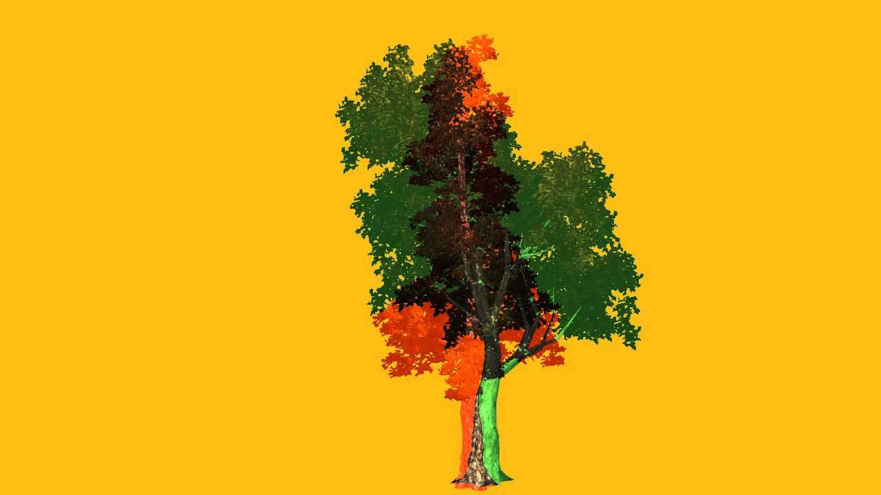Видео футаж дерево жизни