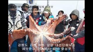 회사워크샵 대왕문어낚시 서울근교 가볼만한곳 속초 낚시 …