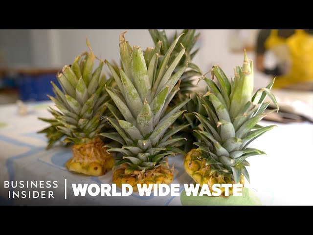 Plates Made From Pineapple Scraps Grow Edible Plants | World Wide Waste
