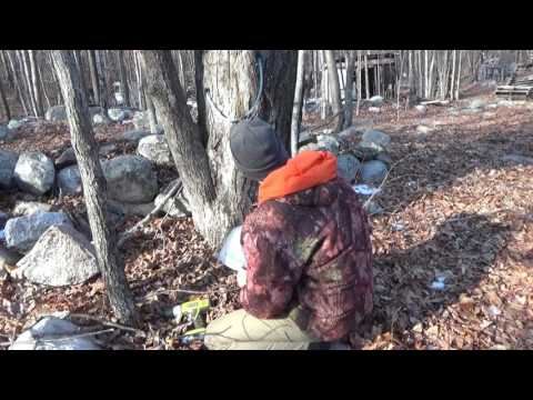 Early Maple Tree Tapping & Off Grid Homesteading