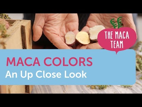 Maca Colors: A Closer Look At The Differences