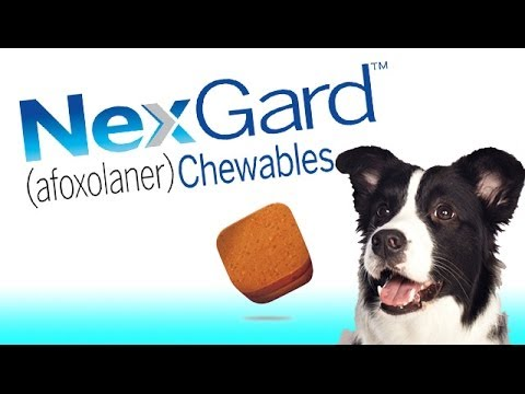 Nexgard Flea And Tick Chewable For Dogs By Merial