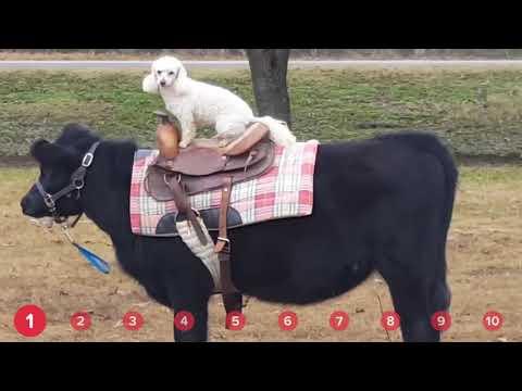 Doggie Cowboy Bouncing Kittens