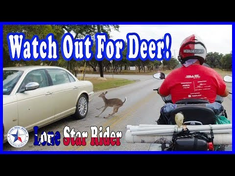 watch-out-for-deer!-10-14--2019