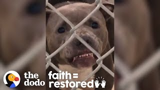No One Thought This Growling Pit Bull Would Make It Out Of The Shelter    The Dodo Faith = Restored