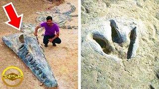 10 อันดับ  สิ่งมีชีวิตยุคก่อนประวัติศาสตร์ที่ไม่ใช่ไดโนเสาร์ (ไม่น่าเชื่อ !!)