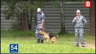 Новосибирск.ПОЛИЦИЯ.54.Полицейские собаки в лагере-30.06.2016