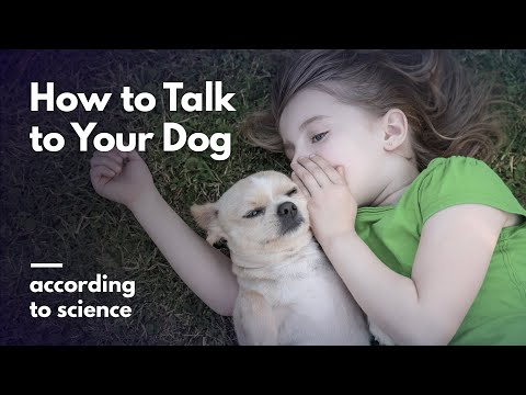 How To Talk To Your Dog, According To Science
