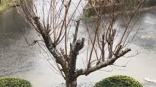 冷たい雨ですが雪の心配なさそうです。 iphone7+smoothQで撮影。 Weathe...
