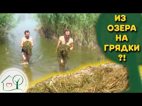 Вопрос: Можно- ли использовать речной( озёрный) ил в качестве удобрения?