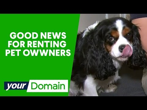 Should pets be allowed in rental properties? | Your Domain