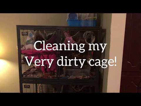 cleaning-my-critter-nation-cage!