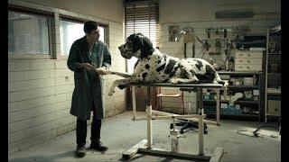 Догмэн – премьера трейлера – с 15 ноября в кино