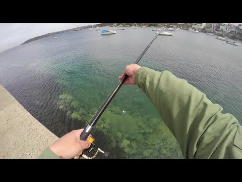 How To Catch Trevally On Shimano ISO Limited 1.2 - Favourite Sydney Harbour Landbased Spot Revealed!