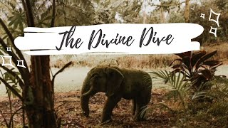 The Divine Dive, A Mermaid Movement Experience