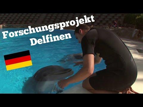 Forschungsprojekt Delfinen