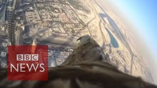 Eagle-cam reveals incredible POV as it descends from Burj Khalifa - BBC News(Subscribe to BBC News www.youtube.com/bbcnews The eagle has landed! And what a journey it was. Watch as Darshan soars above the Dubai sky, capturing ..., 2015-03-14T13:45:40.000Z)