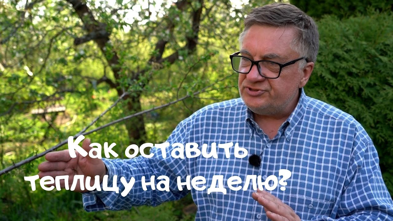 Андрей Туманов: Пусть в теплице лучше будет похолоднее