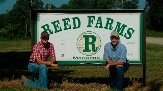 Reed Farms