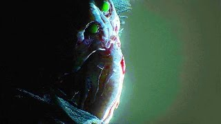 CALL OF CTHULHU New Cinematic Trailer (PS4 / Xbox One / PC)