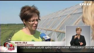 Kurzemē Latvijas zemenes jau tirgū