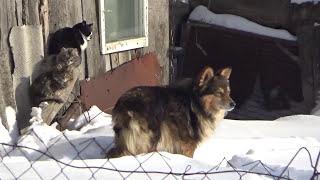 Кошки и собаки на видео