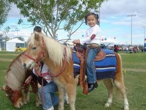 Los Angeles Childrens Birthday Party Pony Petting Zoo Rentals