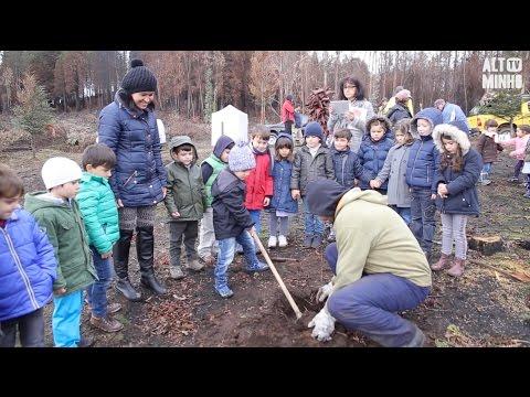 Cerca de meio milhar de crianças plantam 800 árvores em Riba de Âncora | Altominho TV