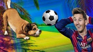 Тот случай, когда собака играет в футбол лучше, чем ты
